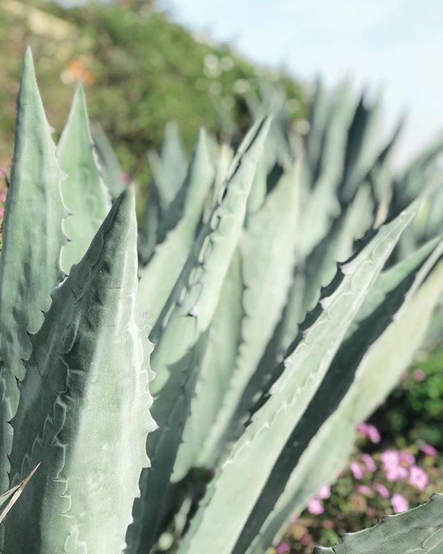 Inspiration is everywhere, especially when you're in nature ✨ Where do you go to rewind, relax and fill up your inspo tank? . . . . #gooutside #daybreakanddusk #daybreakandduskphoto #santabarbara #succulents #lifestylephotographer #lifestylephotographer #losangelesphotographer #losangelesphotography #losangelesweddingphotographer #laweddingphotographer #socalweddingphotographer #restandrelaxation #explorecalifornia