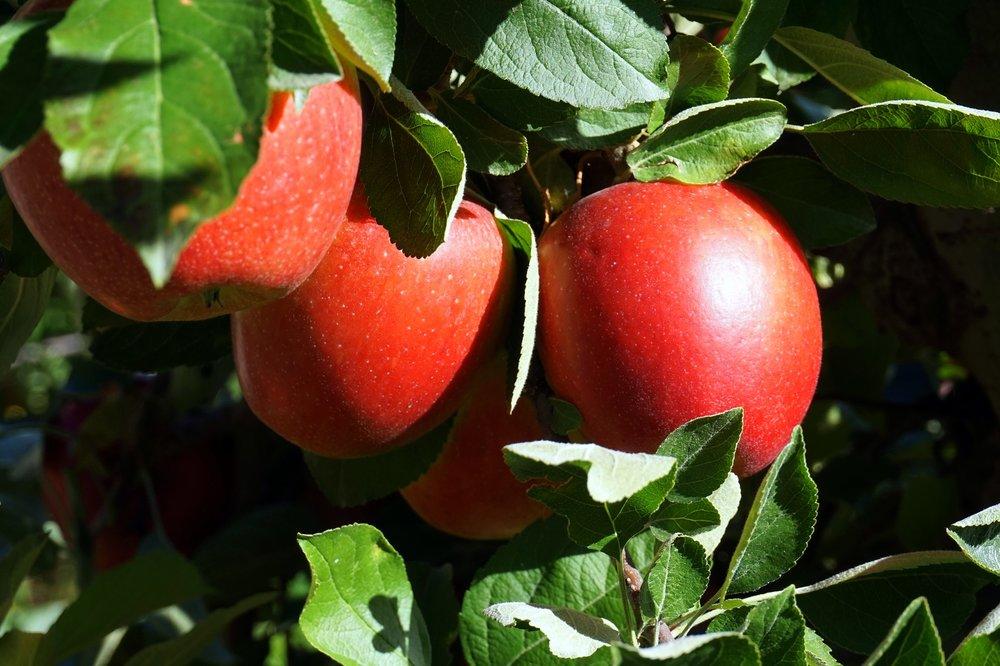 fruit-3157366_1920.jpg