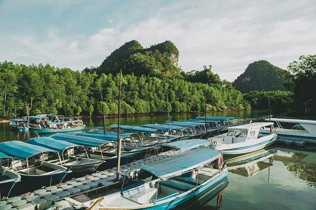 Touring the Mangrova  #travel #travelgram #traveblog #paradise #landscape #malaysia #island #tropical #alone #wanderlust #seetheworld #natgeotravel #mangrova #jungle #backpacking