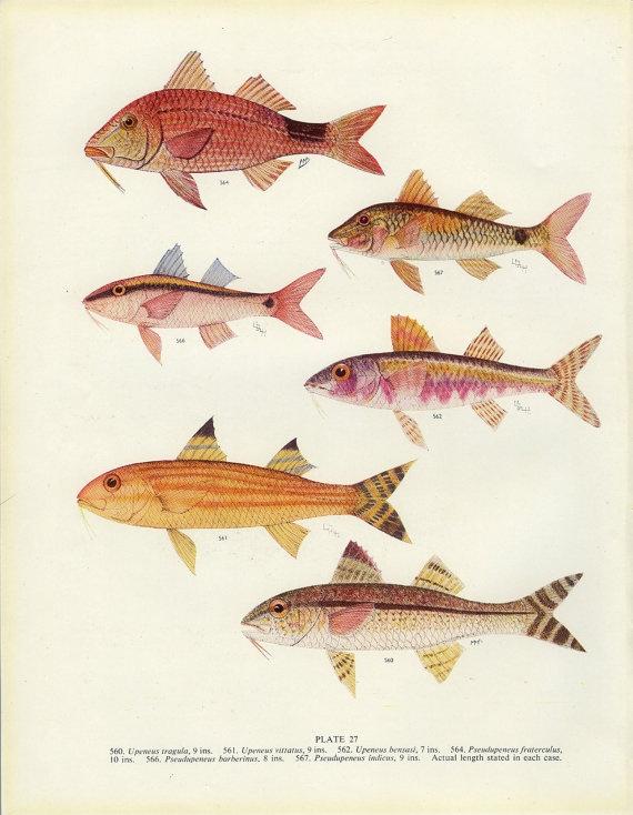 fishposter.jpg