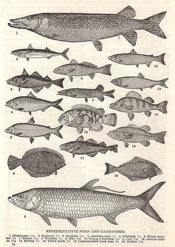 fishposter4.jpg