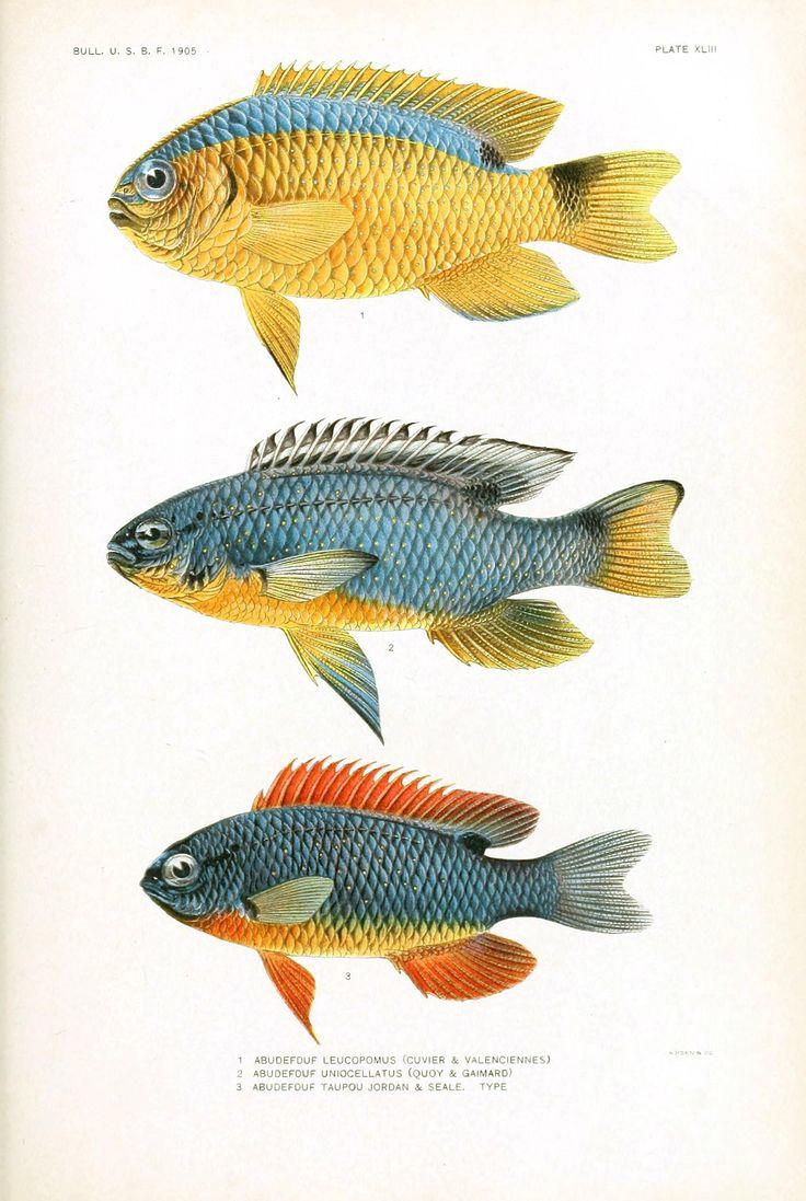 fishposter2.jpg