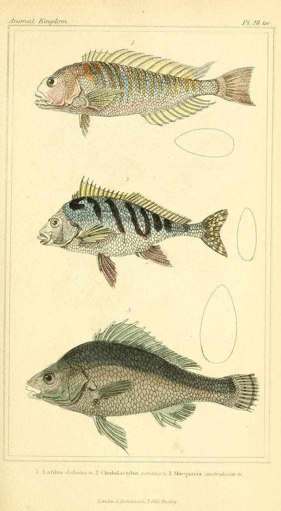 fishposter3.jpg