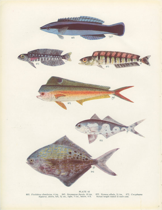 fishposter1.jpg