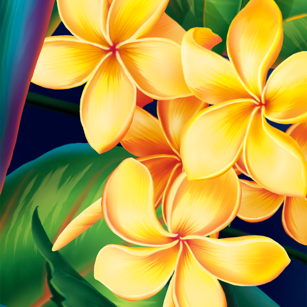Tropical Paradise Hawaiian Plumeria Illustration