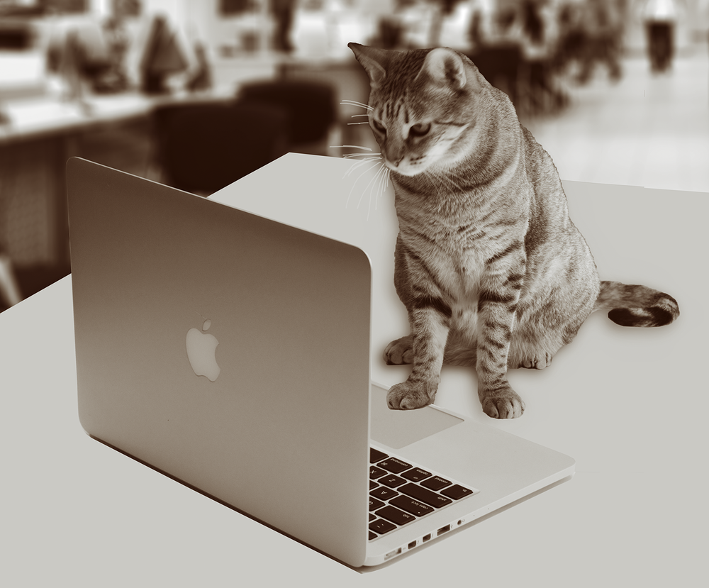 Grace, our CFO (Chief Feline Officer) answering your emails.