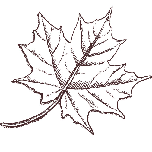 TEC Canada maple leaf illustration