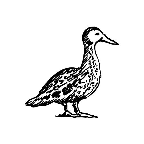 Duck_ill_JDsite.jpg