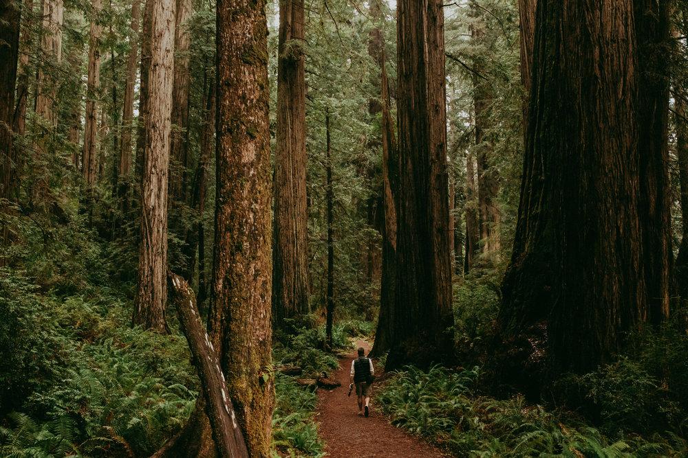 eureka redwoods