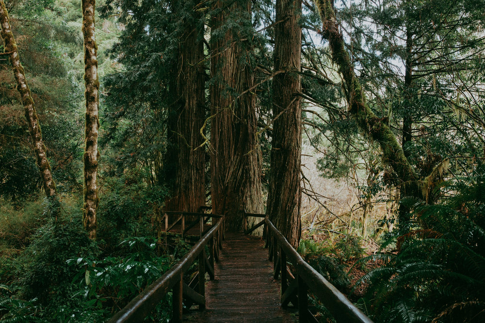 bridge in redwoods