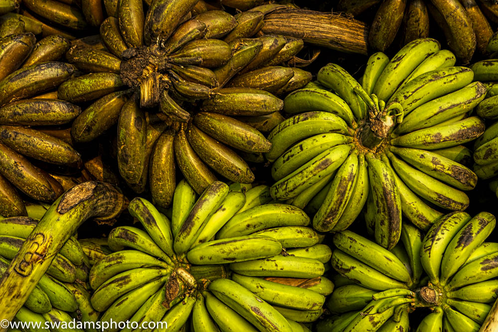Bananas are sorted by origin and quality before being sold and transported to local markets.