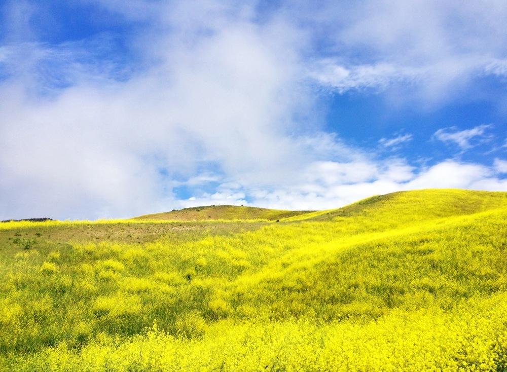 Yellow Season