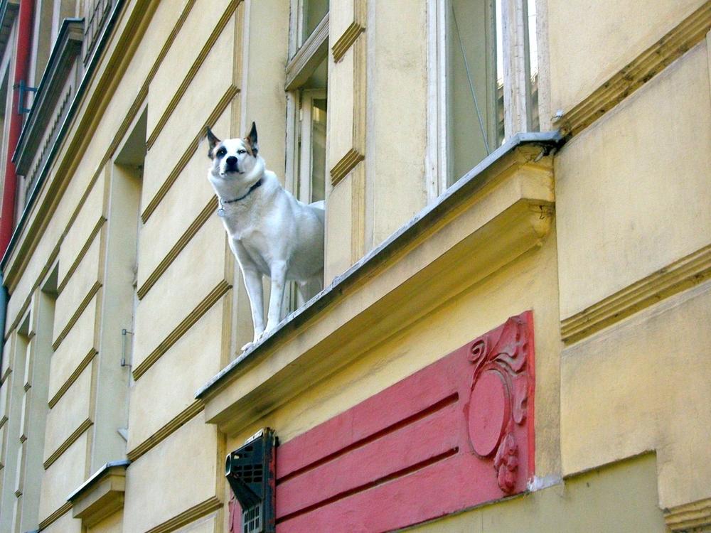 Dog in the Window (Prague)