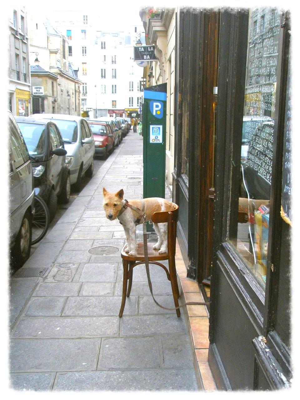 Patient Dog (Paris)