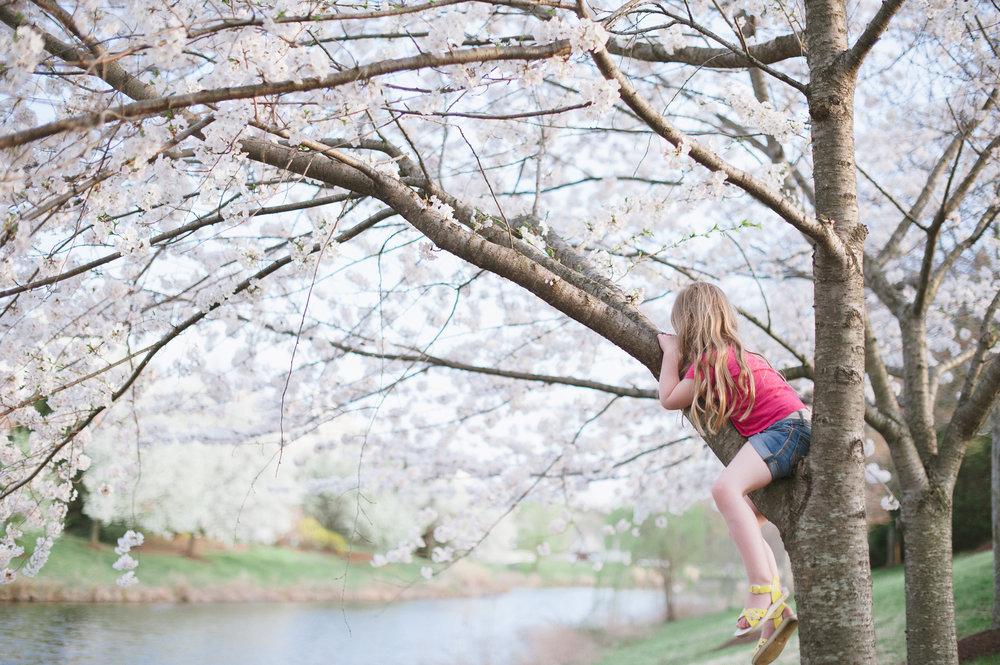 09-kgerhard13-4-blossoms-20.jpg
