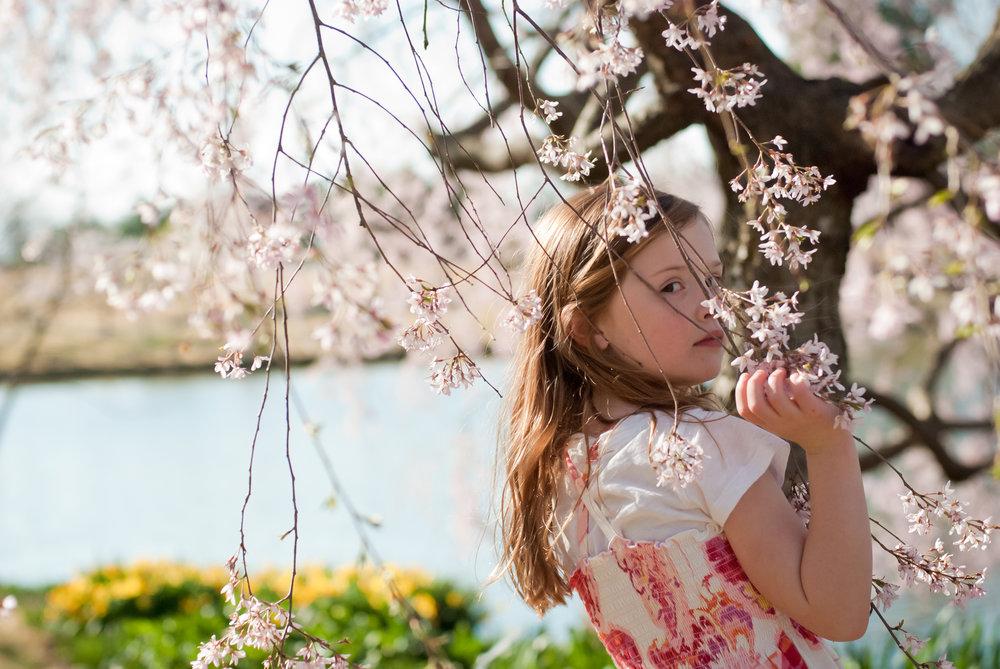 65-kgphoto.cherryblossoms2011-31.jpg