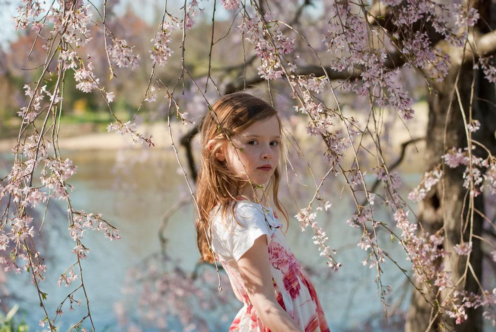 72-kgphoto.cherryblossoms2011-47.jpg