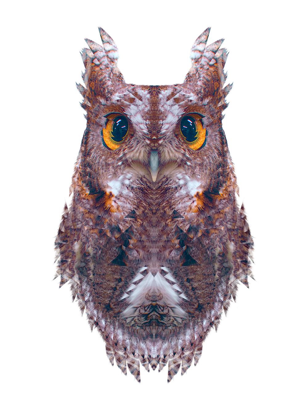 Animalia: Grey Morph