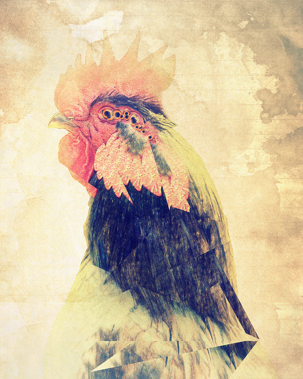 2015 Allegany Arts Council Member's Show - Saville and Schwab Galleries, Cumberland, MD1st Place: Professional CategoryAnimalia: RoosterThe rooster has become a crowd pleaser.  It was one of my first few attempts at digital manipulation.  The rooster was in an enclosure on a horse farm going towards Oldtown, MD.