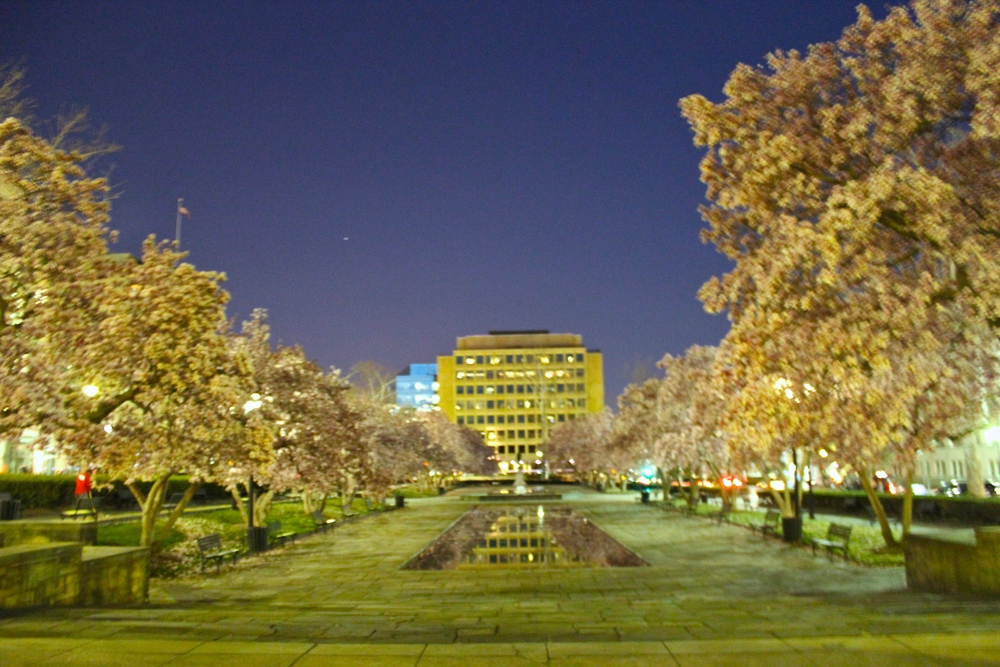 DC at night with the cherry blossoms trees lining the area