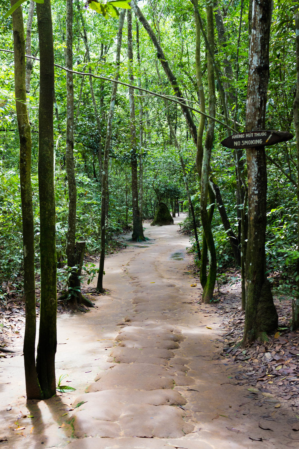 The lush forests of Cu Chi
