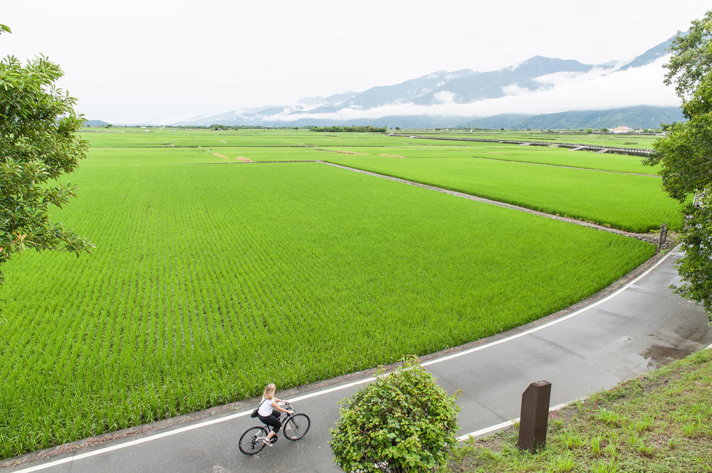 bike path along the ricefield, Taitung.jpg