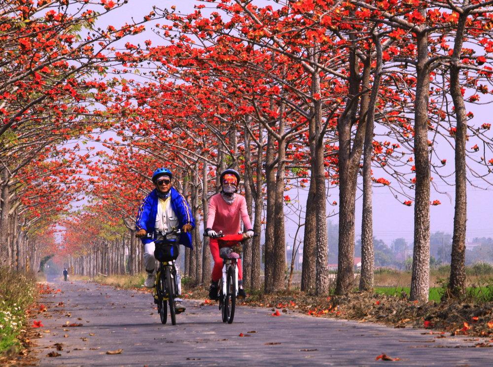 Cycling on the Baihe Cotton Tree Path, Tainan.jpg