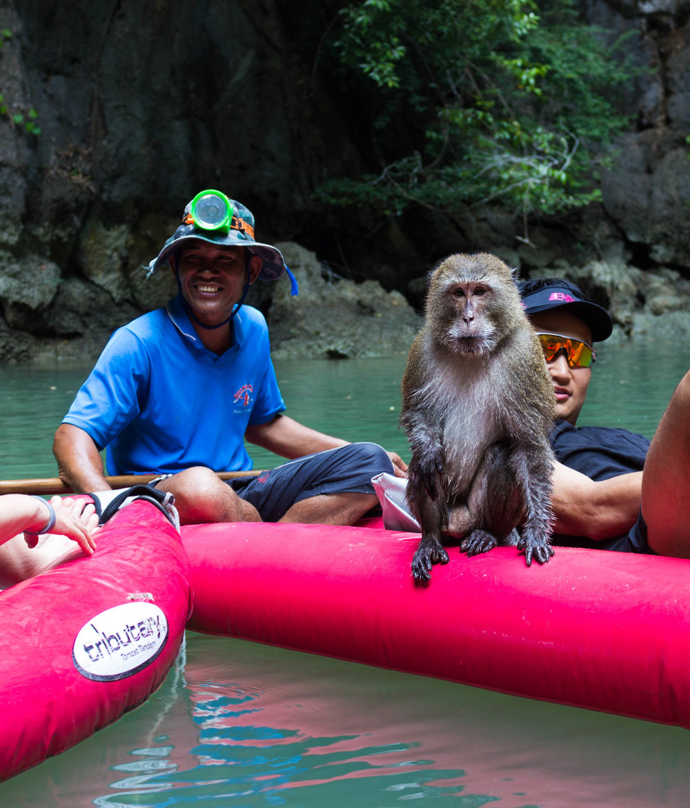 A monkey enjoys a ride on a canoe with guests