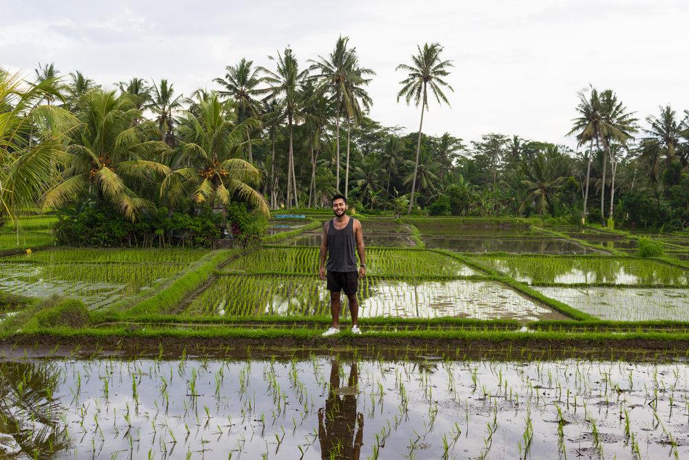 Exploring the rice fields.
