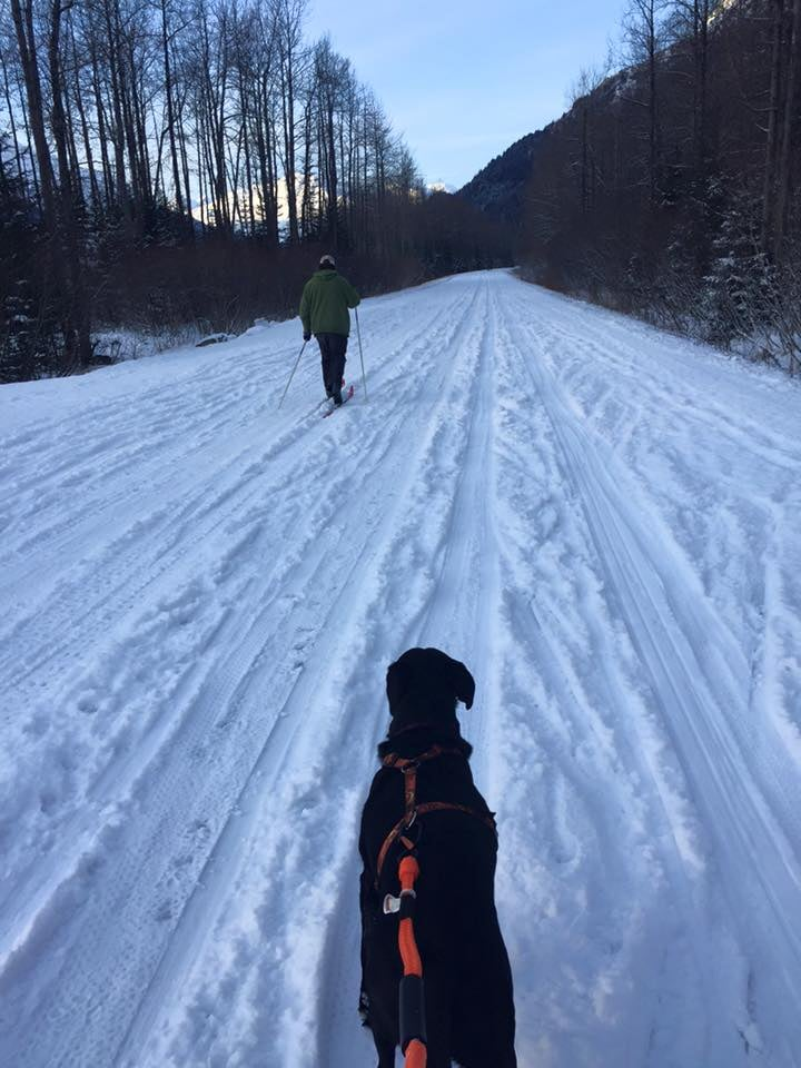Skiing Exit Glacier Road
