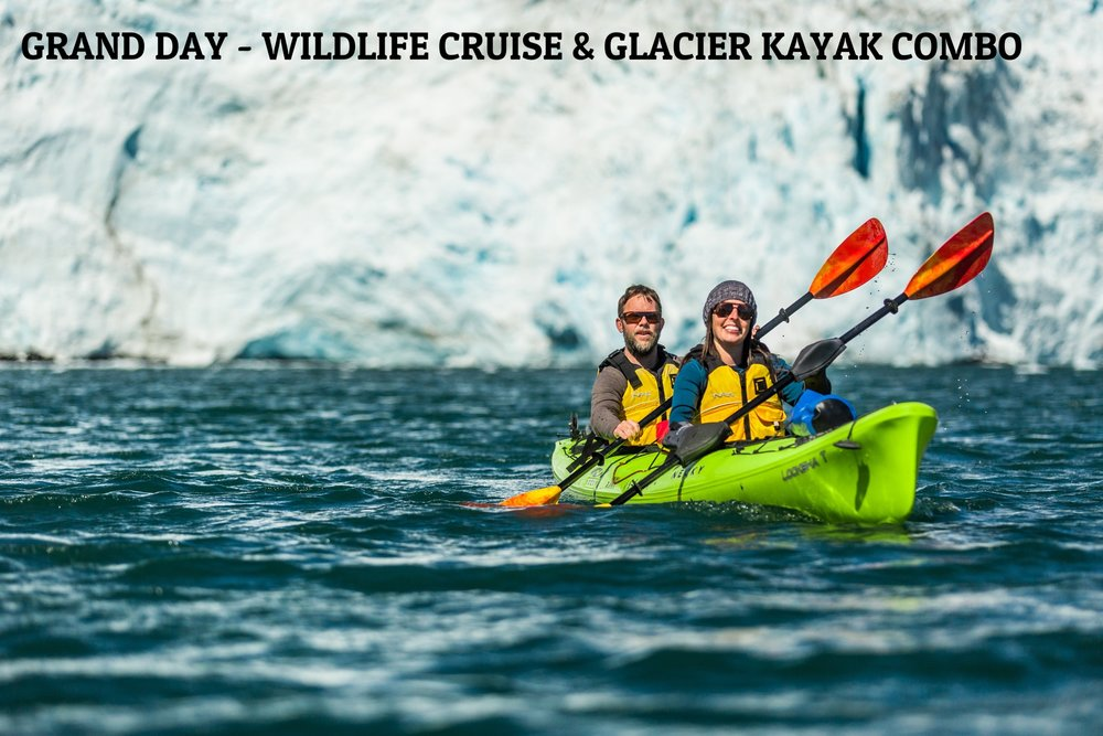 "WHY:  Whales. Glaciers. Puffins. Our Grand Day is just that, a grand day of wildlife viewing and glacier kayaking. This fully-guided trip is completely personalized from start to finish and includes an in-house made picnic lunch.   OUR GUESTS SAY:  ""We spent a great day kayaking in front of a huge glacier. Arthur and Moira, the two guides, are great and fun guys. They organised perfectly the day, so we had plenty of time to enjoy such a unique experience. On our way back we also saw whales, sea liones and dozens of puffins. It's really all you want to have from such a day in Alaska. And everything is done professionally and with a smile. Highly recommended!""  Daniele B - TripAdvisor    TRIP TIP:  This tour fills up fast and early. Don't delay booking.   ALTERNATIVE TOUR:   Resurrection Bay Tour & Kenai Fjords Tour Combo     LEARN MORE ABOUT GRAND DAY - WILDLIFE CRUISE & GLACIER KAYAK COMBO"