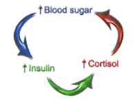 blood-sugar-cycle.png
