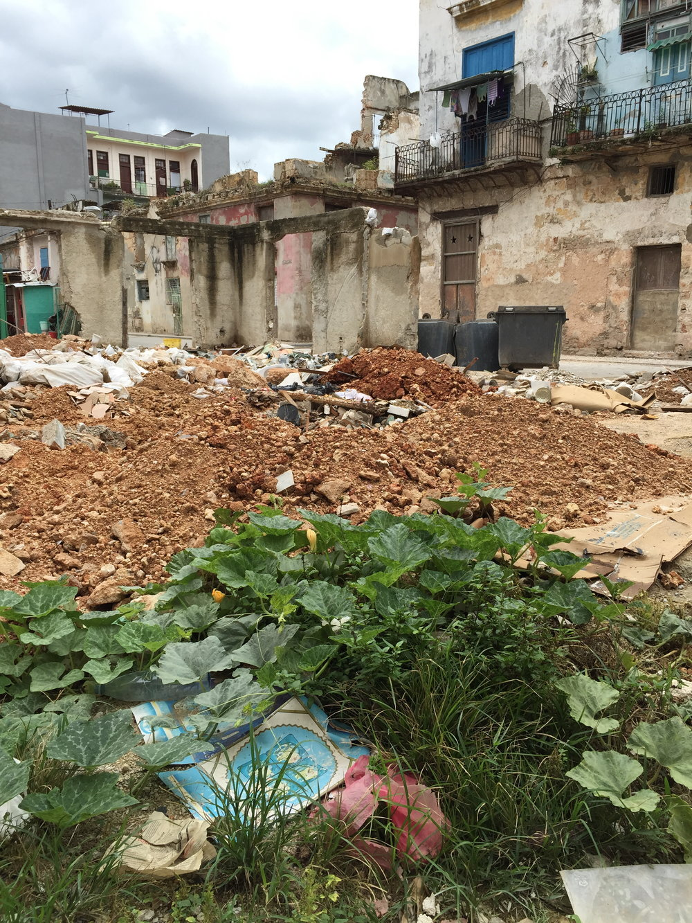 Compost Garden. Vegatables growing in a dump sight. Old Havana, Cuba, 2016