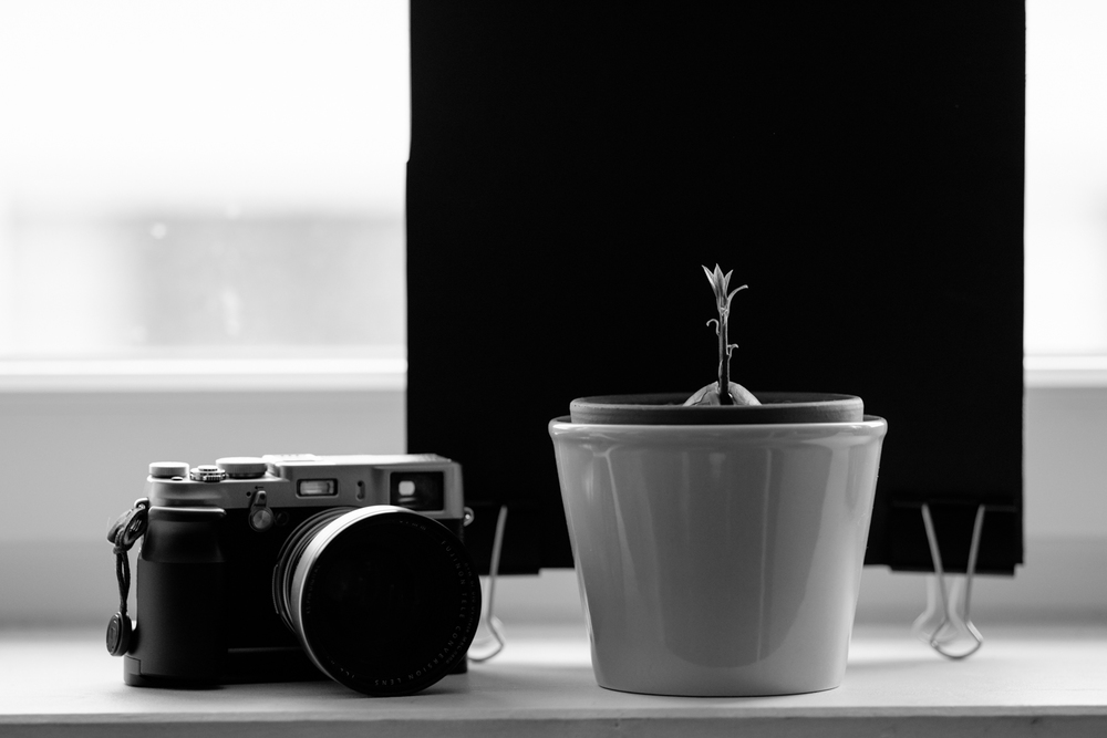 Avocado seedling, backdrop out of black cardboard and for scaling reasons my X100S. Shot with the XF 90mm @ f/2
