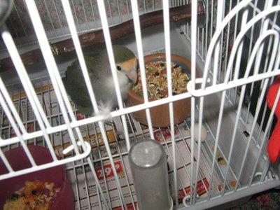 Horton the Love Bird Hatches Eggs for Dr. Seuss Week