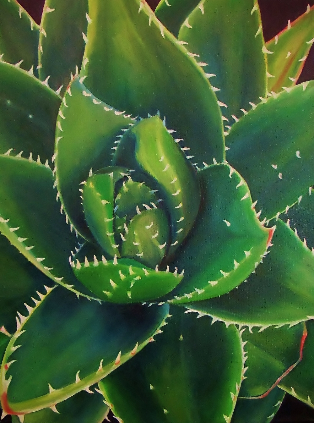 Aloe Brevifolia , 2014 Oil on canvas, 24 x 18 inches