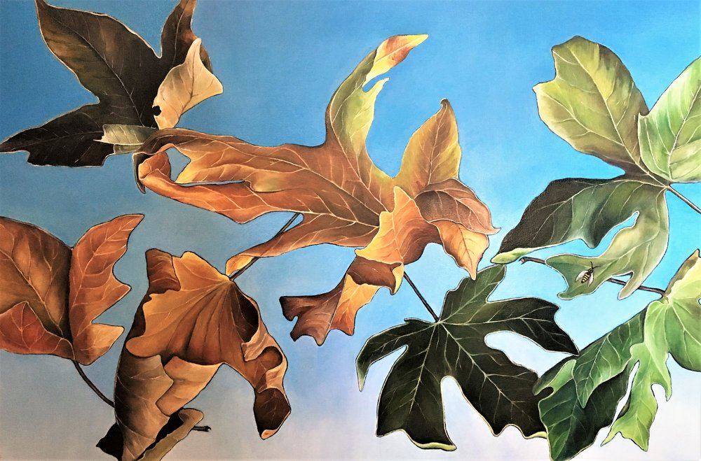 Autumn Sycamore , 2017 Oil on canvas, 30 x 40 inches