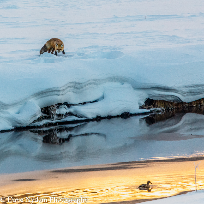 Yellowstone-1601-PSEdit.jpg