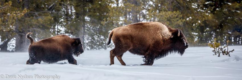 Yellowstone-379.jpg