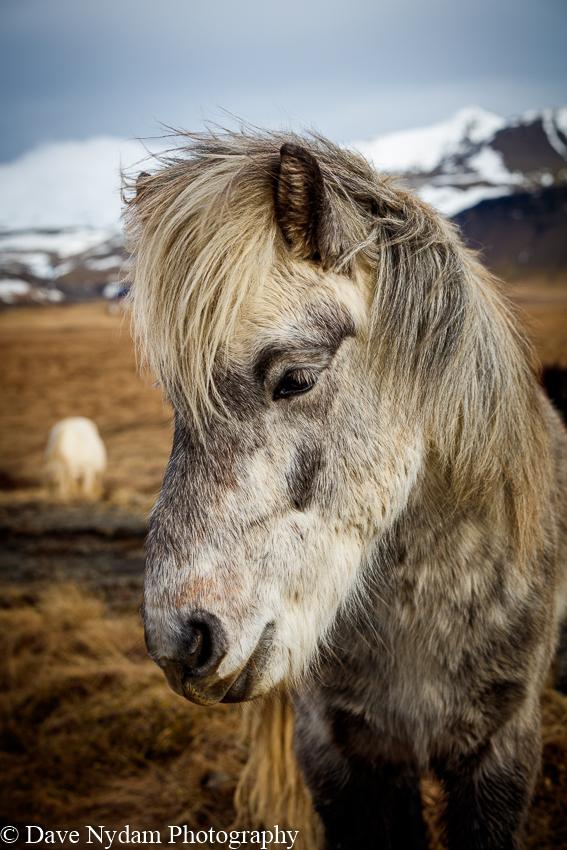 Iceland-786.jpg