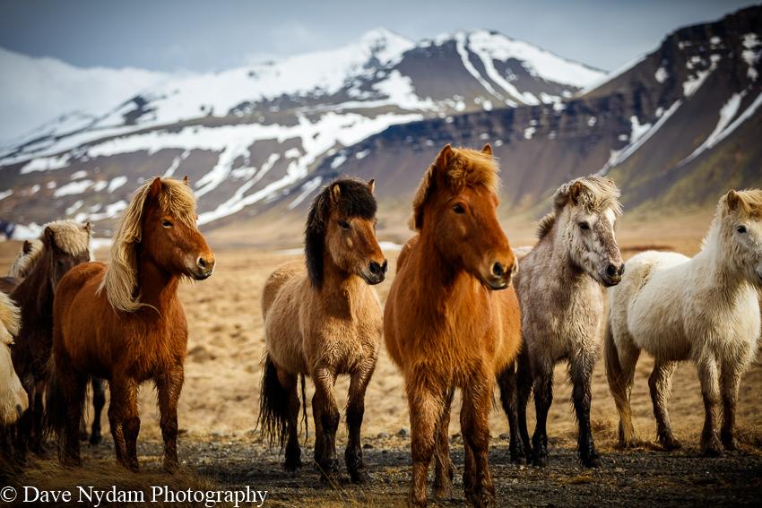 Iceland-555.jpg