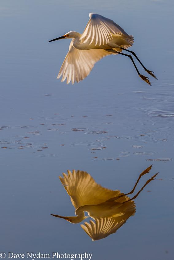 Everglades-234.jpg