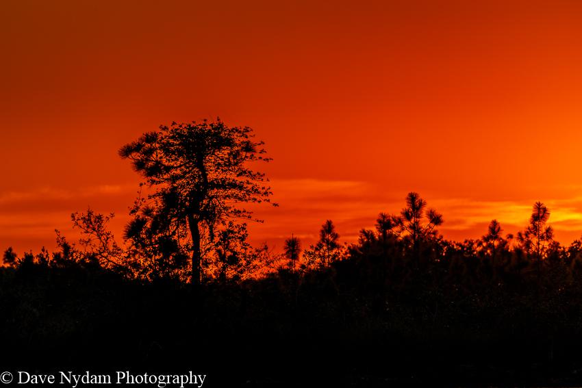 Everglades-146.jpg