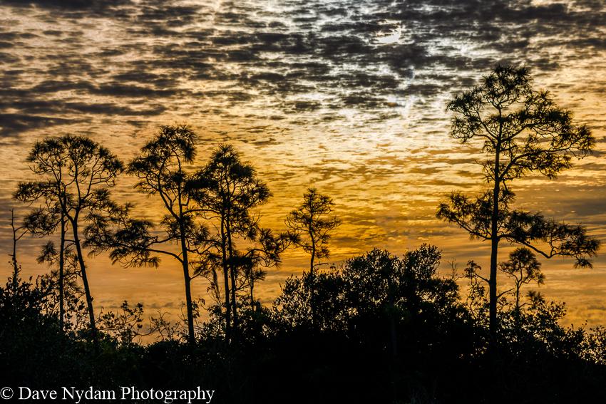 Everglades-186.jpg