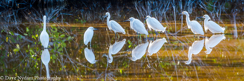 Everglades-218.jpg