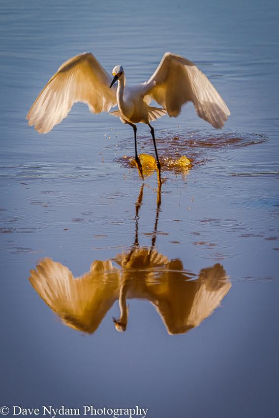 Everglades-232.jpg