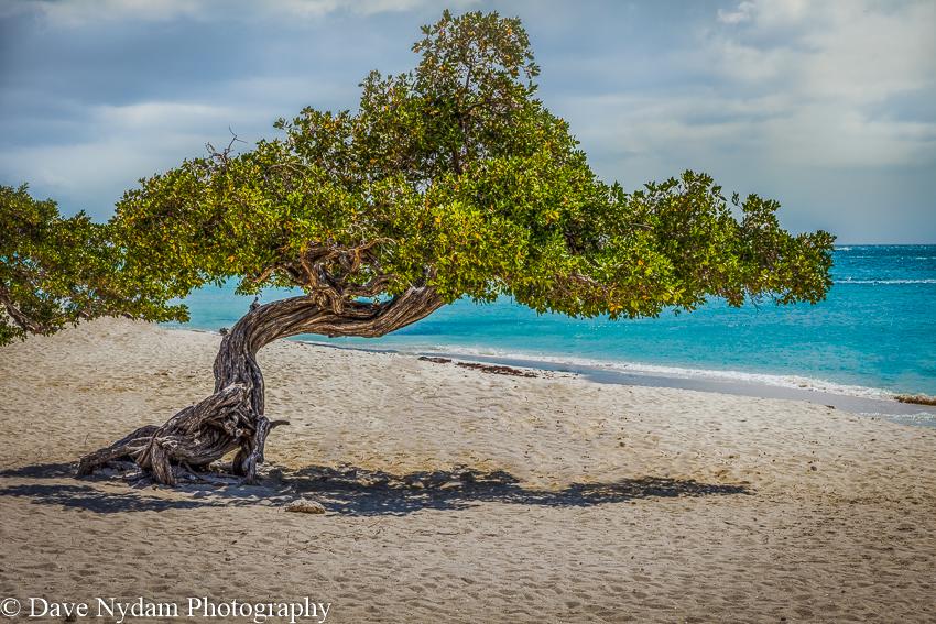 Aruba-63.jpg