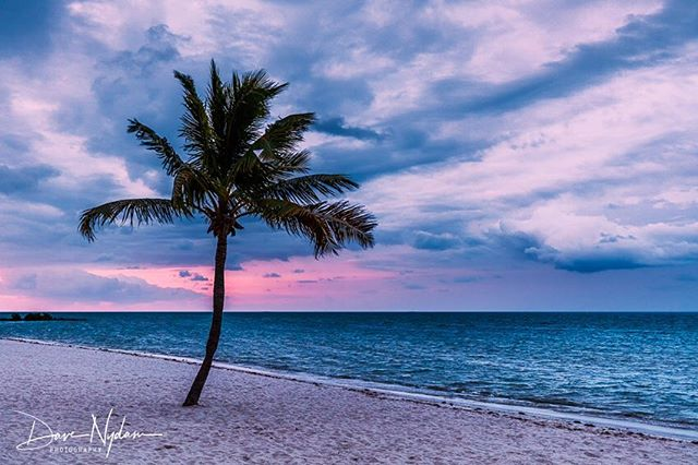 Sunrise in Key West. #floridakeys #sunrise #landscape_lovers #landscape #beach #palmtrees #canonphoto #canon #earthpix #wonderful_places