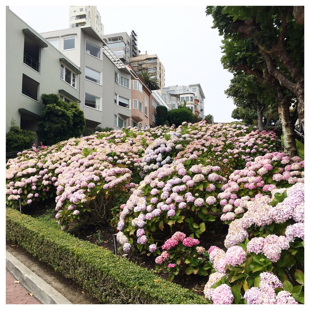 Lombard Street with some beautiful view & flowers!