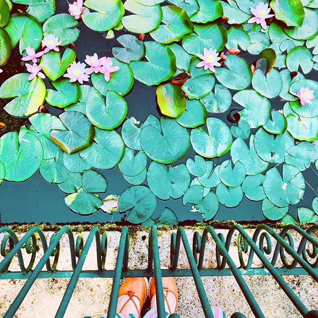 Pięknych snów! #nature #przyroda #lato #summervibes #travelphotography #natura #lilies #shoesselfie #greenery #sweetdreams #goodday #liveauthentic #freshness #flashesofdelight #darlingdaily #darlingmovement #igdaily #igerspoland #ilovepoland #polskajestpiekna #fotografia #fotografie #pursuepretty #likeapainting #likeafairytale #fairytail #ig_photooftheday #ig_global_life #ig_captures #ig_nature